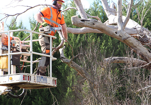 Rural and suburban tree pruning, tree lopping and tree and stump removal Mt Macedon, Macedon ranges and Sunbury