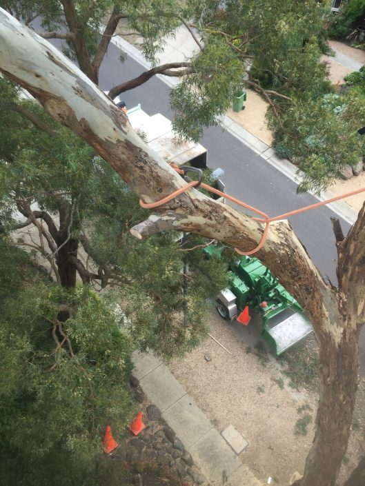 Large gum tree removal macedon ranges, gisborne and sunbury by PM Tree Lopping and Stump Removal