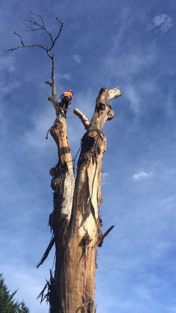 Safe dead tree removal by PM tree lopping and stump removal Macedon Ranges