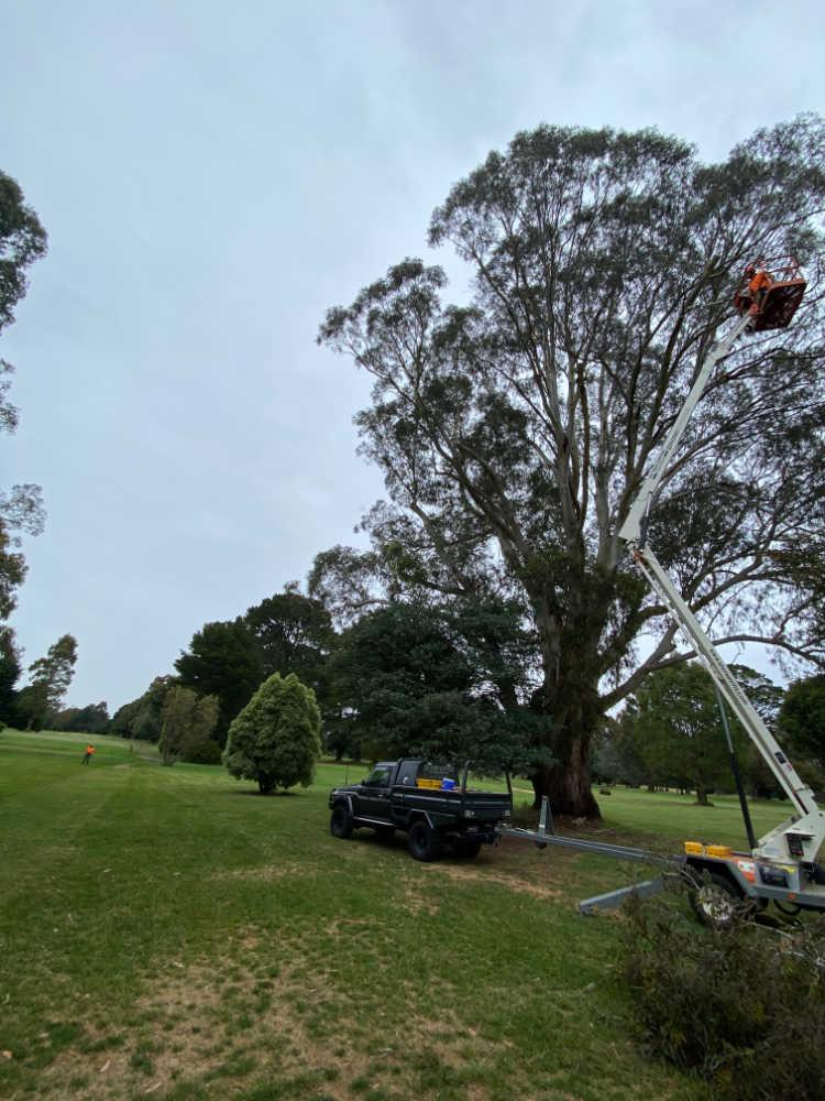 pm tree worx tree lopping and tree removal mt macedon sunbury