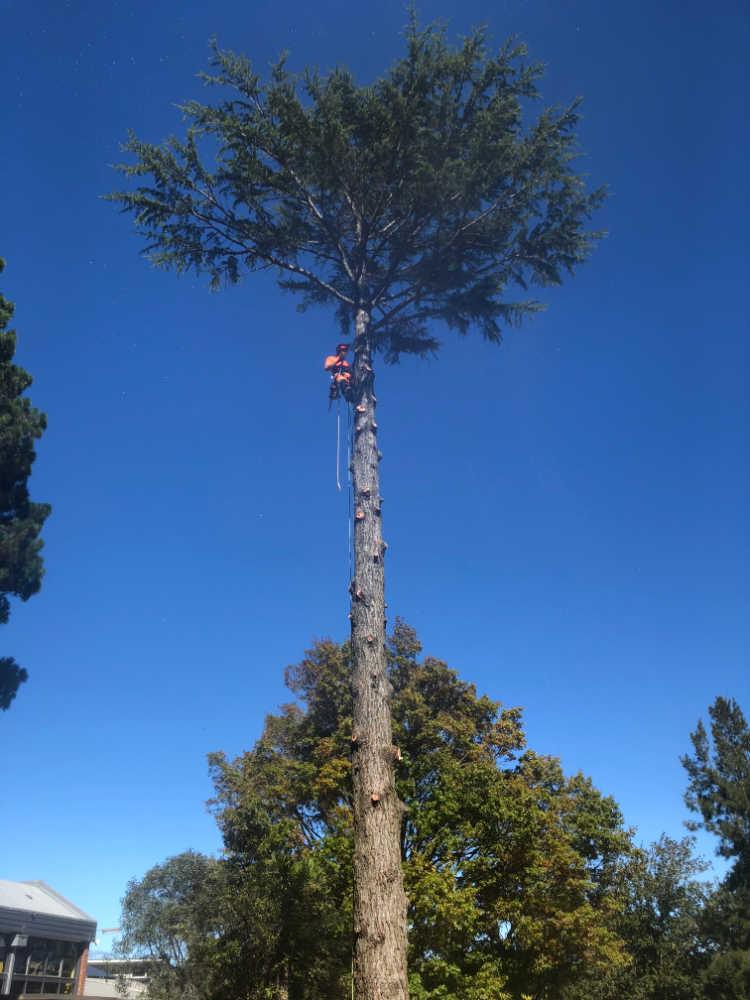 pm tree worx tree lopping mt macedon sunbury